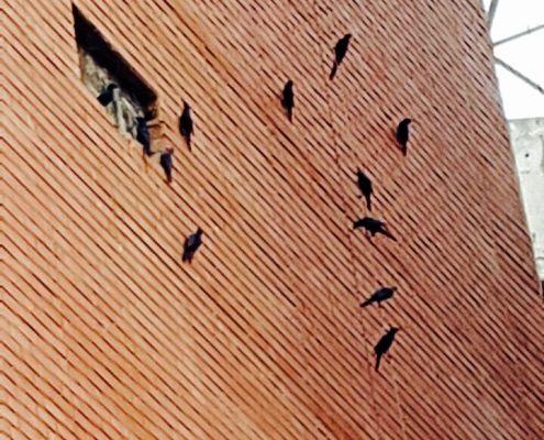 uMkhumbane Museum, Bird Wall. Choromanski Architects
